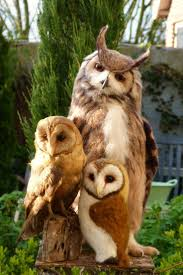 46 Best Owls Images On Pinterest | Nature, Night Owl And Owl Pictures 3716 Best All About Owls Images On Pinterest Barn Owls Nature Winter Birding Guide Lake Champlain Region 53 Flight At Night Owl Species Farm House England Stock Photos Images 1538 Owls Photos Beautiful Birds 2552 Give A Hoot Children Large White Carraig Donn Mayo Sghilliard Glass Studio Little Opens In Westport Food Drink Nnecticutmagcom 250 Love You Always