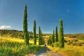 Cottage Tuscany Villa Country House Road Beautiful Nature Wallpaper Desktop Background