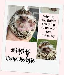 Ceramic Heat Lamp For Hedgehog by Bringing Home Hedgie Basic Items You Need Before Getting A Hedgehog