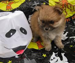 Using Pumpkin For Diarrhea In Dogs by Feeding Pumpkin