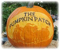 Pumpkin Patch Homer Glen Il by Bengtson U0027s Pumpkin Farm In Homer Glen Illinois The Best Pumpkin