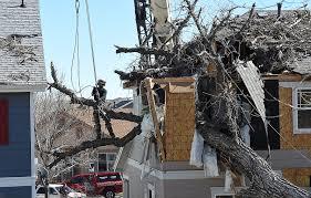 Massive tree blown over destroys Loveland home Loveland Reporter