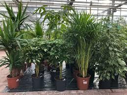 zimmerpflanze grünpflanze wohnzimmer büro pflanzen blühpflanze ab