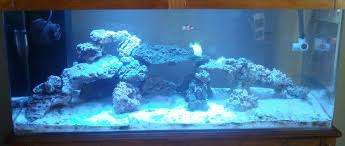 Auspicious Aquarium: Adding 20 Lbs More Live Rock Aquarium Aquascaping Rocks Aquascape Designs Ideas Project Reef Rock 21 Dry Walt Smith Bulk Supply Review Real Generation 4 Digitalreefs News Info How To Live Purple Live Rock Youtube Updated Clear Pics Newbies Attempt At Aquascaping So Far 3reef Design Aquafishvietcom Bring Back The Wall News Builders Keeping Austin Club Walls For A Tank Callorecom River Suggestion Planted Forum