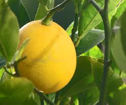 Plant Of The Month May - LEMONS & LIMES Archie Eats Kings Plant Barn Archies Journal By Michael Ngariki Garden Design Cafe Henderson Aucklandnzcom Daniels Wood Land On The Set For Redwood Kippen Home Facebook Youtube Monthly Gardening Checklist December