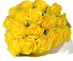 The meaning of a yellow rose signifies strong feelings of pure joy