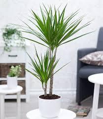 gesundes raumklima durch zimmerpflanzen