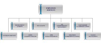 our people organization organizational chart contacts opm gov