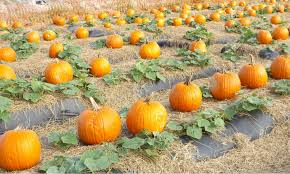 Coconut Grove Pumpkin Patch by South Florida October Fall Events