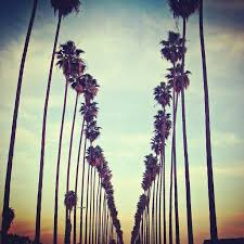 Palm Trees Splendidsummer California