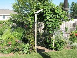 Garden Yard With Grapes - Growing Grapes At Home | Wearefound Home ... Small Plot Intensive Gardening Tomahawk Permaculture Backyard Vineyard Winery Grapes In Your Own Backyard Lifestyle Bucks County Courier More About The Regent Winegrape Growing Your Grimms Gardens Trellis With In The Yard At Home How To Grow Grapes Steemit Seedless Stark Bros Grape Orchards Pinterest Orchards Seattle Wa Youtube Grown Grape Vine And Trellis Stock Photo Royalty First Years Goal