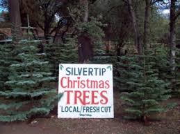 Artificial Silvertip Christmas Tree by J Thaddeus Ozark U0027s Cookie Jars And Other Larks Christmas Tree Envy