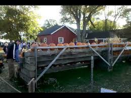 Fleitz Pumpkin Farm Groupon by Fleitz Pumpkin Patch Youtube