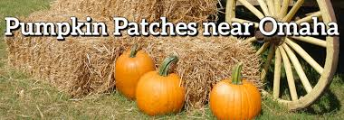 Omaha Pumpkin Patch by Friendly Pumpkin Patches Near Omaha Ne