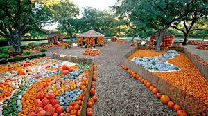 Pumpkin Patches Near Dallas Tx 2015 by Arboretum Pumpkin Patch 2015 Near