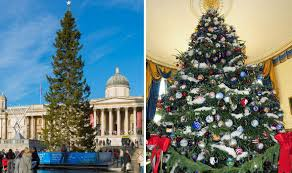Christmas Tree Species Usa by Fraser Fir To Usurp Norwegian Spruce As Uk U0027s Favourite Christmas