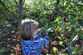 Pumpkin Picking Nj Colts Neck by Eastmont Orchards In Colts Neck Nj Parent Reviews U0026 Photos