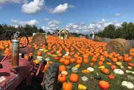 Best Pumpkin Apple Picking Long Island Ny by Best Apple Picking Near Nyc Orchards To Visit This Fall Thrillist