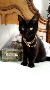 thug cat thug cats