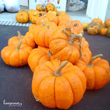 Summers Pumpkin Patch Frederick Md by What Is Pumpkin Chunkin U0026 How To Host Your Own Event Housewives