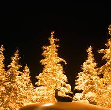 Blinking Christmas Tree Lights by Residential Christmas Lights Installation Utah Brite Nites