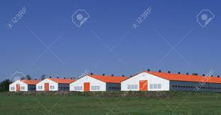 Agriculture In Poland. Modern Farm Poultry Buildings. Stock Photo ... Alexander County Nc Poultry Farm And Historic House Barn Doors Eyeem Stepping Into Steryear At The Blue Earth Fairgrounds Best Meal Of 2016 Hill Stone Barns Eat Sleep Motlow George Dickel Manchester Bonnaroo Coffee Under Contract Big Cabin 100 Acres Oklahoma Land Elkuntryhescom Online 22000 Chickens Killed In Ashland Fire Fox8com 6 Broiler The Elrod Group 79 Best Pet Oh Boy Images On Pinterest Boys Chicken Commercial Buildings King City Lumber Mound