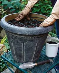 how to plant tulips in pots gardening