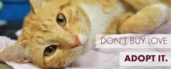 adopt a cat adopt aggieland humane society