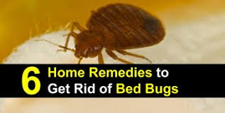 6 Home Reme s to Get Rid of Bed Bugs Incl Recipes