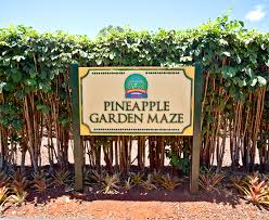 Things To Do at Dole Plantation Trip Report