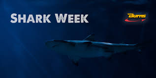 Shark Week | Sharks And Supply Chain | Freight Tracking | Trucking ... Man Tgs 26480 6x4h2 Bls Hydrodrive_truck Tractor Units Year Of Trucking Jobs Dip By 1400 In June Transport Topics Tgx 18440 Truck Exterior And Interior Youtube Vilnius Lithuania May 9 Truck On May 2014 Vilnius 18426 4x2 Lxcab Wb3600 European Trucks Pinterest Inc Remains Deadly Occupation Fatigue Distracted Driving Dayton Plans Move To Clark County Site How Much Does A Commercial Driver Make Drivers Have Higher Rates Fatal Injuries Than Any Other Job Ryders Solution The Driver Shortage Recruit More Women De Lang Transport Trucking Services Home Facebook