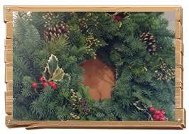 Nordmann Fir Christmas Tree Seedlings by Sunny Day Tree Farm U Cut Christmas Tree Farm Sherwood Oregon