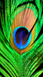 Peacock Feather Green Blue IPhone 6 Plus HD Wallpaper