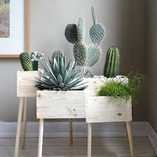mit pflanzen dekorieren blumenkasten zimmerpflanzen