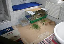 kaninchen info badezimmerurlaubskaninchen