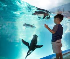 OdySea Aquarium Free Novolog Flexpen Coupon Spell Beauty Discount Code Seaquest Aquarium Escape Room Olive Branch One A Day Menopause Inn Shop Squaw Valley Promo Coach Bags Uk Odysea Aquarium Local Coupons October 2019 Digital Coupons Dillons Acurite Codes Jeans Wordans Ourbus March Dcg Stores Fniture