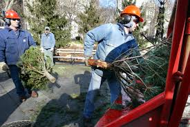 Christmas Tree Disposal Nyc 2016 nyc to provide curbside pickup recycling of christmas trees cbs
