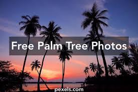 1000+ Amazing Palm Tree Photos · Pexels · Free Stock Photos