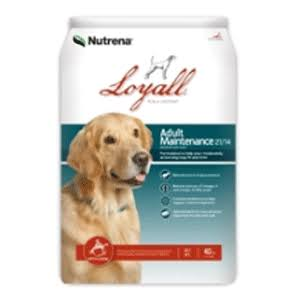Loyall Adult Maintenance Formula 21/14, 40 lb.