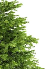 Which Christmas Tree Smells The Best Uk by Real Christmas Tree Delivery London U0026 Uk Order Xmas Trees Online