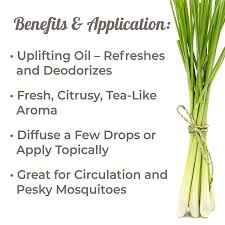 100 Lemongrass Food Truck Amazoncom Plant Therapy Essential Oil 100 Pure