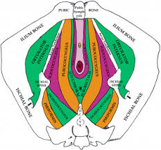 Hypertonic Pelvic Floor Muscles by Uptight And Personal The Hypertonic Pelvic Floor