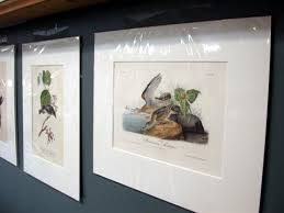 Come In For Arts Alive To See Original Audubon Bird Lithographs These Vintage Prints Were Hand Colored Under Audubons Supervision 1840 1844