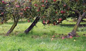 jus de pomme maison le