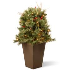 Types Of Christmas Trees To Plant by Find All Types Of Christmas Trees At The Home Depot
