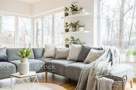 graue ecke sofa mit kissen und decken in weiß wohnzimmer interieur mit fenstern und glastür und frische tulpen auf tisch stockfoto und mehr bilder