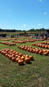 Bengtsons Pumpkin Patch Homer Glen Il by Don U0027t Miss These 10 Great Pumpkin Patches In Illinois