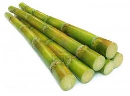 Reed Clipart Sugarcane Crop 29