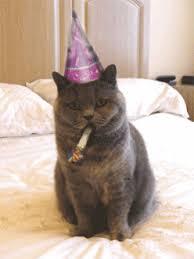 Happy Birthday Cat GIF 618