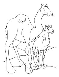 Dromedary Camel Coloring Pages And Baby Page Download Print Online Face